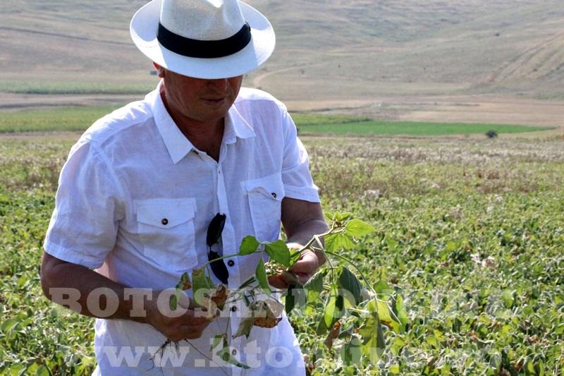 seceta in judetul Botosani (8)