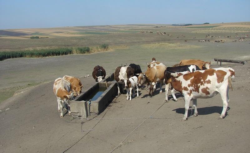 vaci-seceta