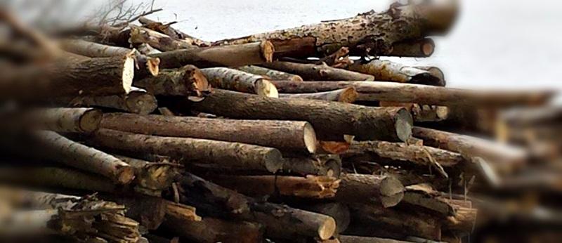 lemne-de-foc1