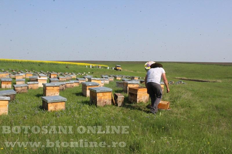 iustin marineac, apicultor din judetul botosani (15)