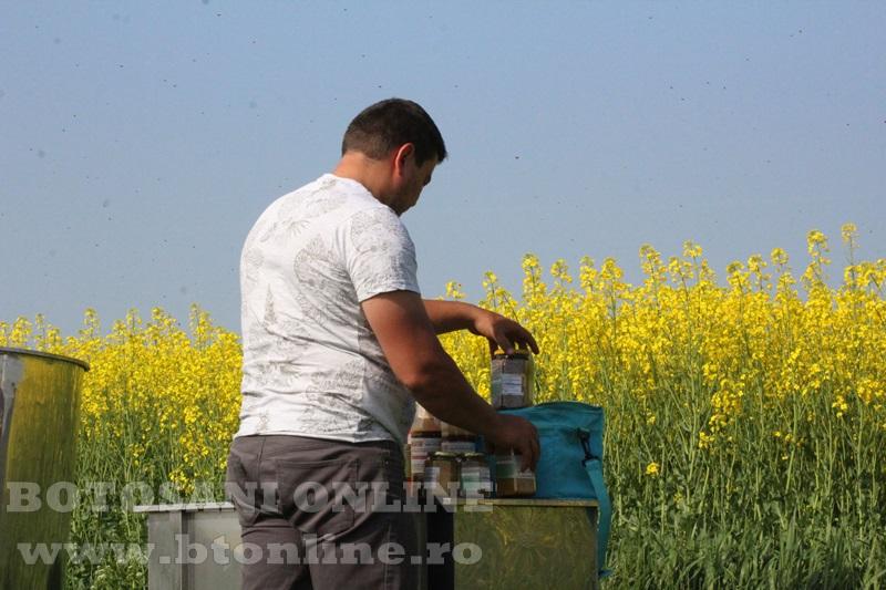 iustin marineac, apicultor din judetul botosani (2)