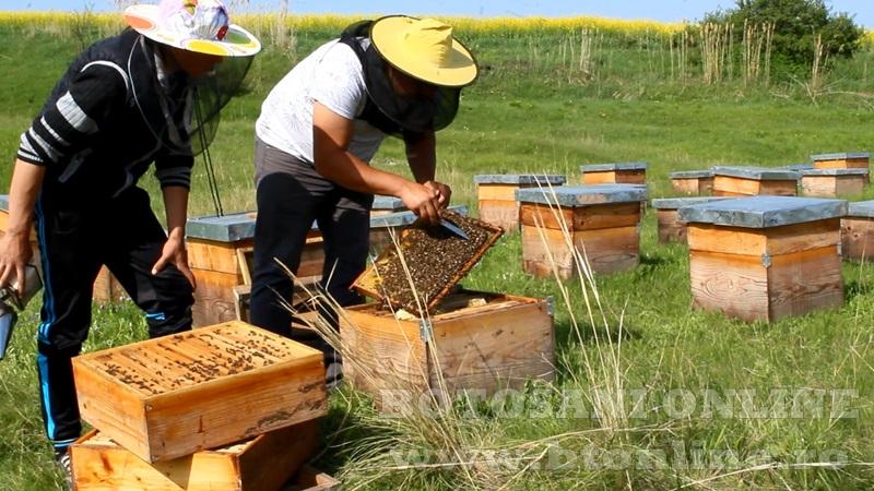 iustin marineac, apicultor din judetul botosani (21)