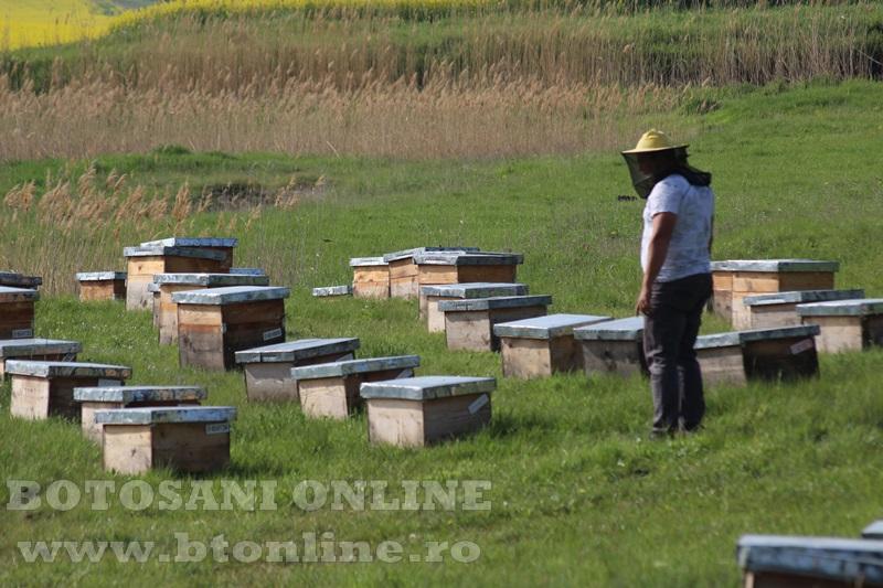 iustin marineac, apicultor din judetul botosani (6)