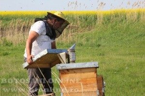 iustin marineac, apicultor din judetul botosani (7)