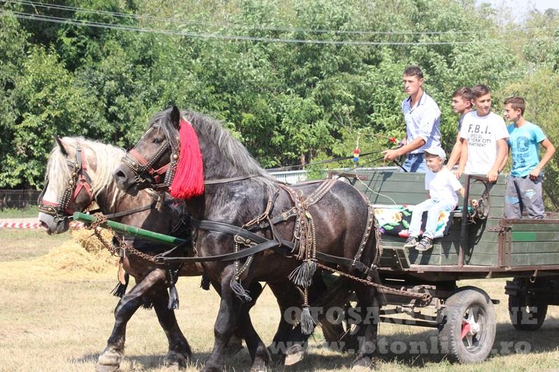 zilele comunei paltinis (29)