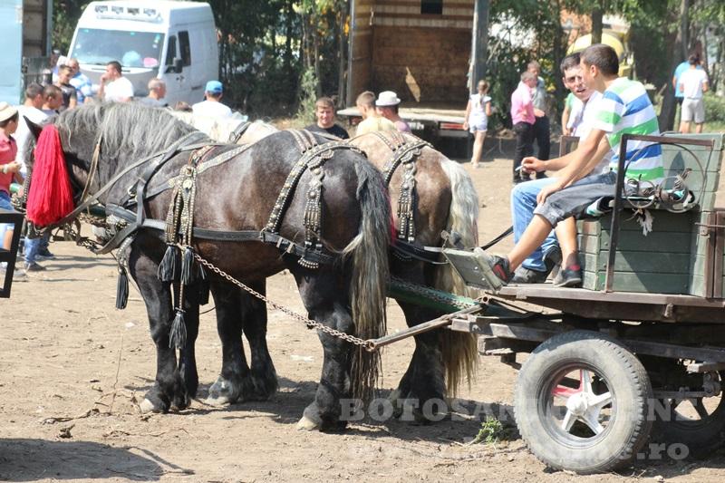 zilele comunei paltinis (4)