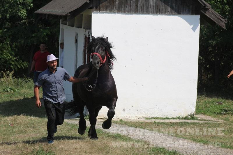 zilele comunei paltinis (7)